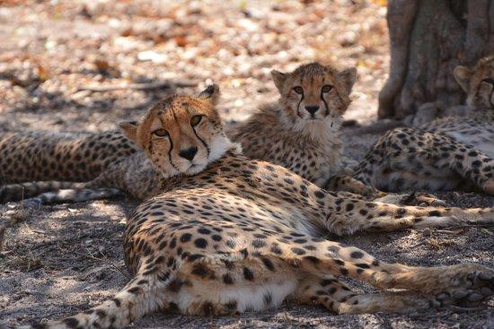 Parco nazionale di Kruger Photo