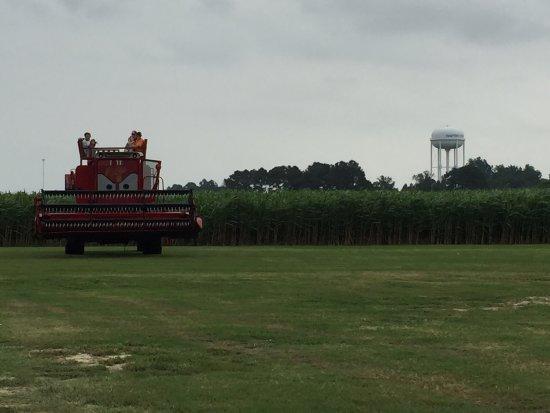 Clinton, North Carolina: Wonderful first trip to Hubbs Farm~We'll be back!!