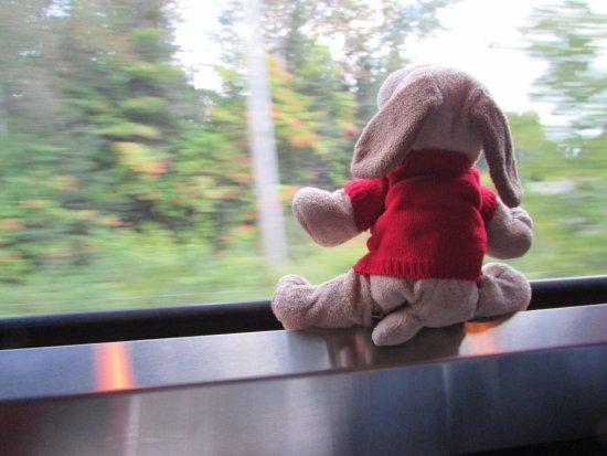 Agawa Canyon Tour Train: Puppy on a Train