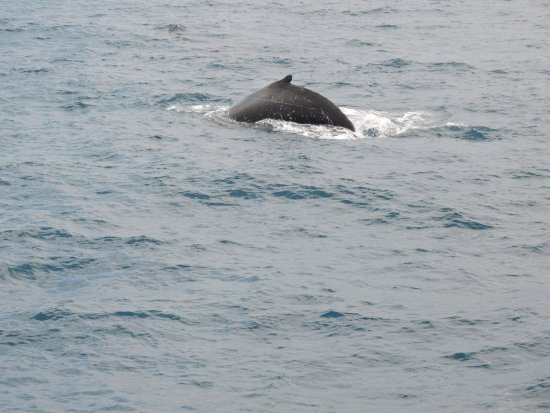 Urangan, Australia: Whale