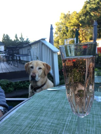 Baileys Harbor, WI: Dog-friendly dining in the backyard