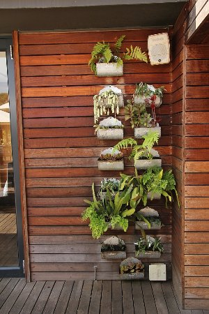 Kloof, Afrique du Sud : Small plants on the veranda of the restaurant