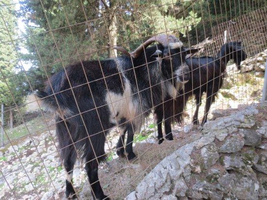 Волимес, Греция: Askos Stone Park