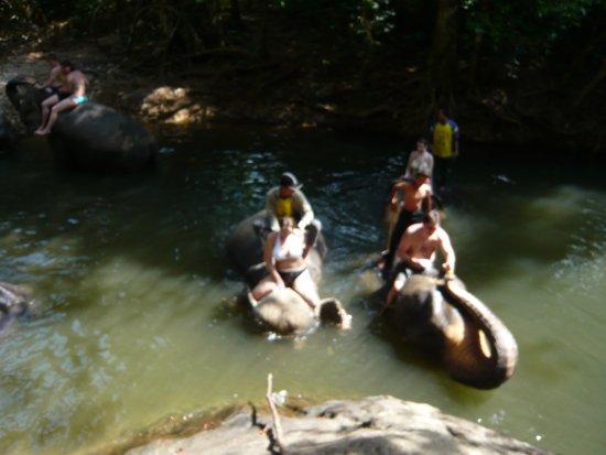 Ban Chang Thai - Elephant Camp: купаемся