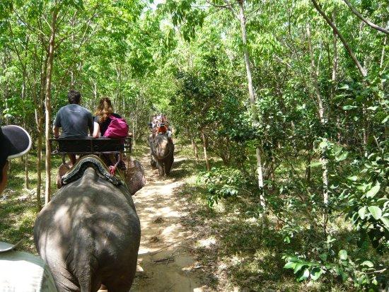 Ban Chang Thai - Elephant Camp: дорога назад через джунгли