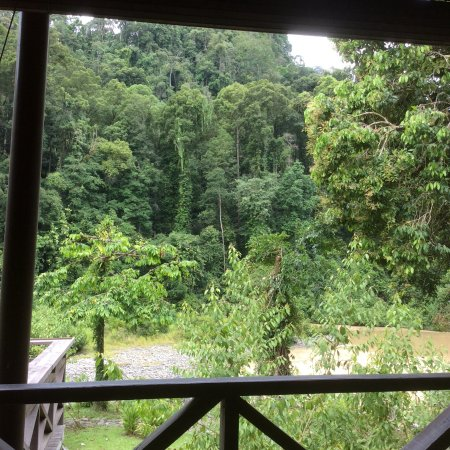 Borneo Rainforest Lodge: View from dining area