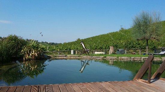 Monteveglio, إيطاليا: 20160926_151620_large.jpg