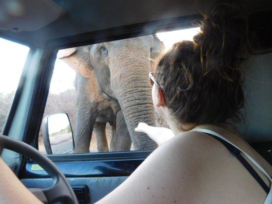 Tissamaharama, Sri Lanka: elephant
