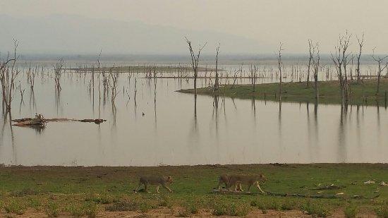 Lake Kariba, Zimbabwe: 20160924_165357_large.jpg