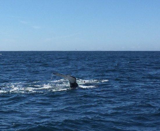 Ocean Safaris: photo0.jpg
