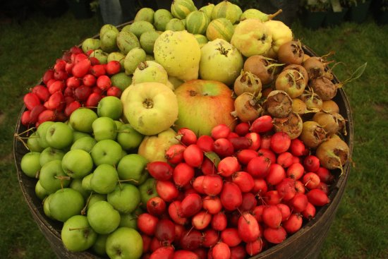 Malvern Wells, UK: One of the lovely displays in the cider and perry tent