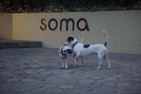 Soma Surf Resort: photo4.jpg