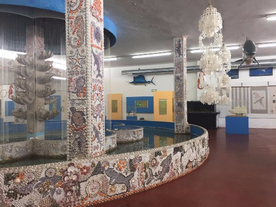 Sea Shell City Museo de Conchas: Interior del museo