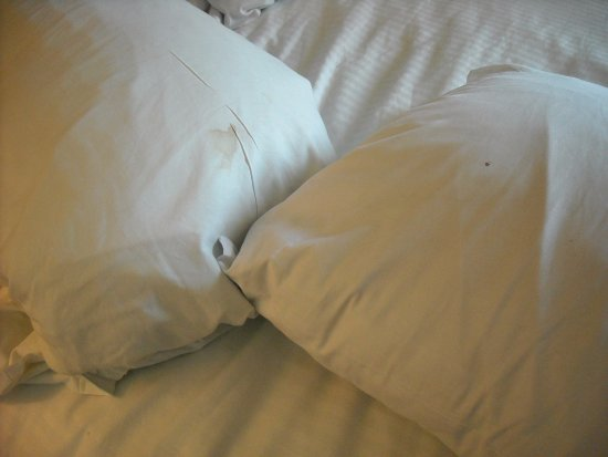 Ocean Beach Club: The pillows are clearly filthy