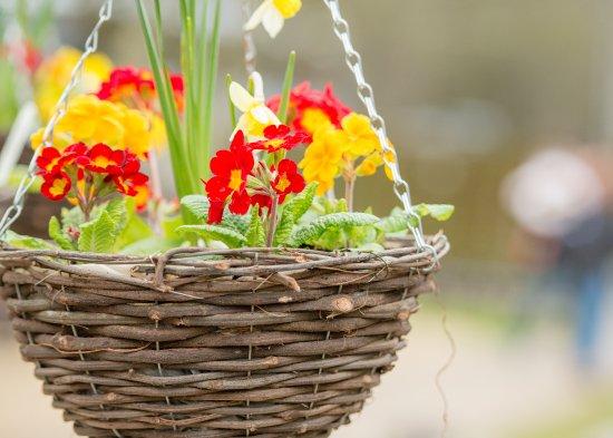 Thrift Farm: Beautiful hanging baskets from the Market Garden