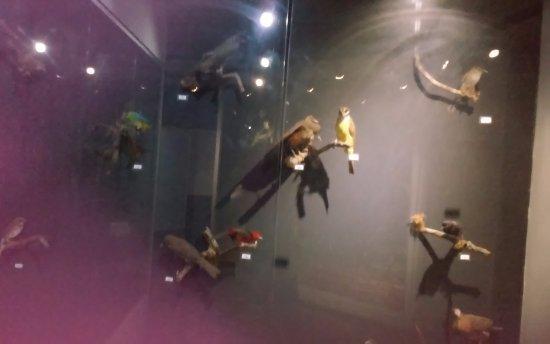 Itatiaia, RJ: Pássaros de várias espécies empalhados
