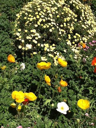 Hartbeespoort, Südafrika: Flowers