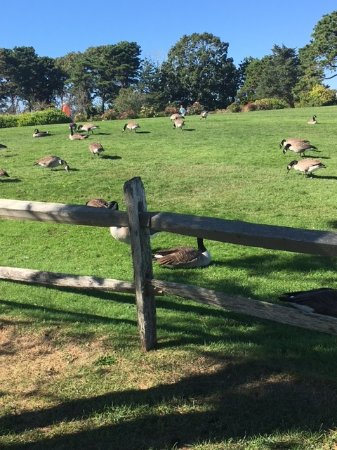 John F. Kennedy Memorial: Beware of the geese on the property!