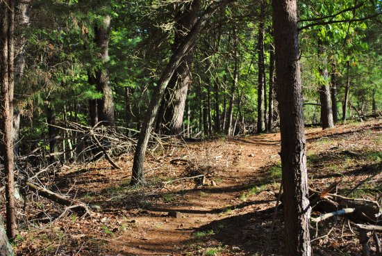 Ridgeway, Wirginia: Trail at Mountain Laurel Trails