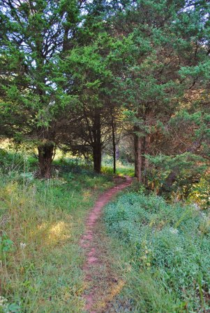 Ridgeway, VA: Trail at Mountain Laurel Trails