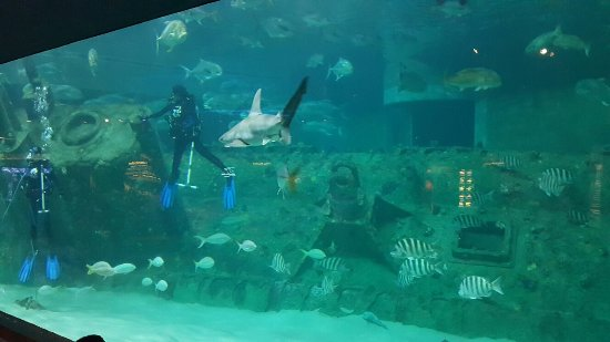 Fish - Picture of North Carolina Aquarium at Pine Knoll ...