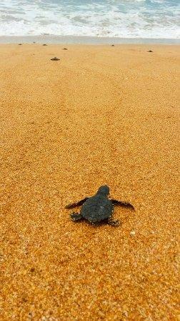 Western Region, Ghana: Baby turtles from our turtle hatchery