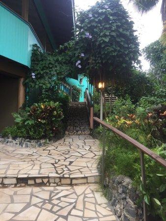 Lazy Parrot Inn: photo5.jpg