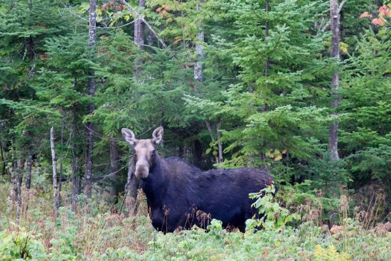 Northwoods Outfitters - Day Tours: photo0.jpg