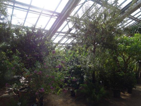 Gewachshaus Mediterran Picture Of Oekologisch Botanischer Garten