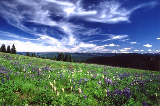 Manning Park, Канада: Sub-alpine meadows