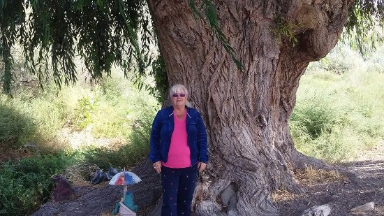 Melba, ID: I had to be in this picture to see how huge this tree is.