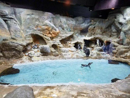 Aquarium of Niagara: The penguin habitat