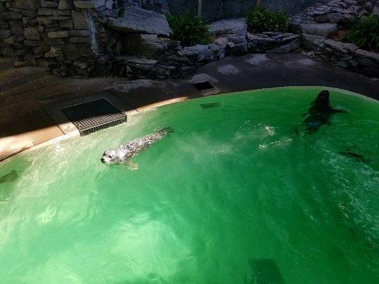 Aquarium of Niagara: The Sea Lions exhibit