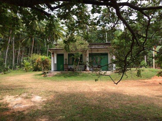 Bentota, Sri Lanka: photo4.jpg