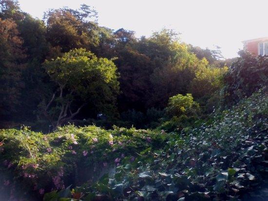 Quinta das Murtas: Vista desde la piscina de los exuberantes jardines del hotel y zonas colindantes.