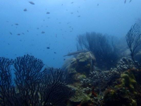 Vieux Fort, St. Lucia: diving at Superman's flight