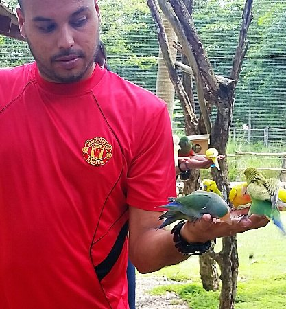 Different types of love birds, parakeets and smaller sized parrots