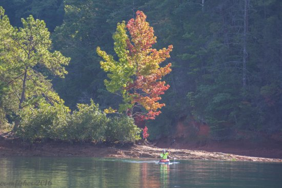Salem, Güney Carolina: Beautiful trees starting to change