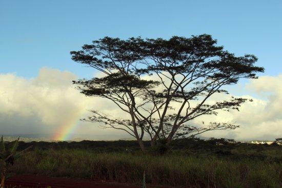 Wahiawa, HI: Rainbow during the train ride