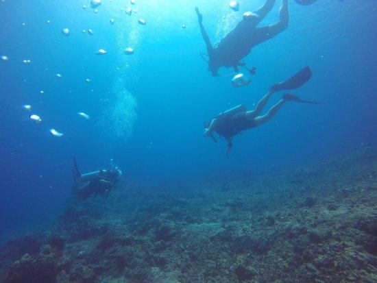 Pool zum ben picture of manta dive gili air gili air tripadvisor - Manta dive gili ...