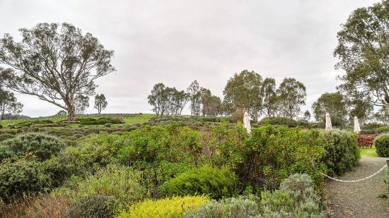 Lyndoch, Australia: The view out