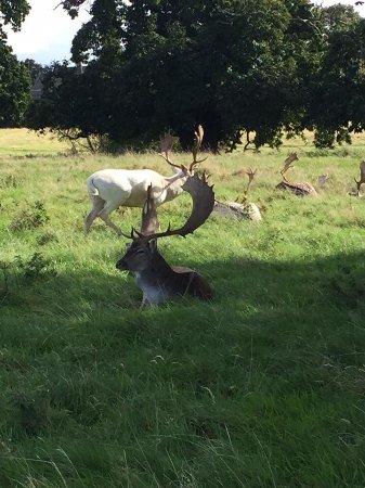 วอริก, UK: Deers