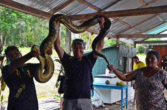 Amazon Ecopark Jungle Lodge: Contato com um filhote de Sucuri em Ariaú -