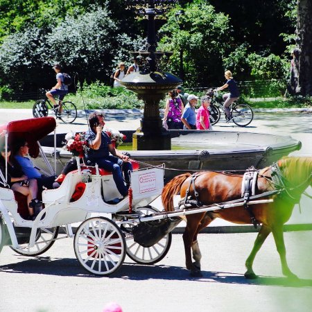 Photo of Sightseeing Central Park Carriage Tours at 59 Street And 7th Avenue Entrance, New York City, NY 10019, United States