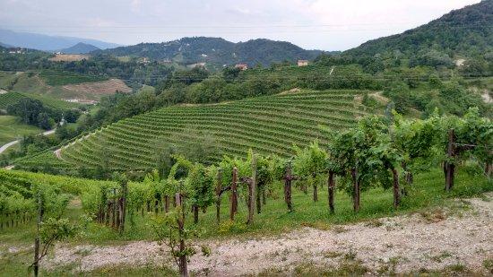 Cison Di Valmarino, Italie : Vigneti a perdita d'occhio