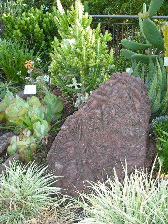 Porto Mare Hotel: Pedra esculpida e colecção de cactos