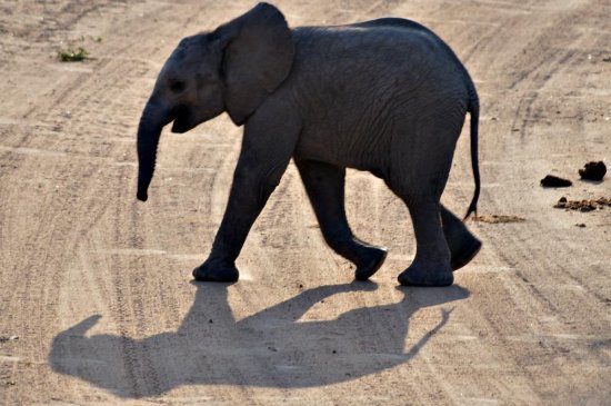 Nelspruit, Südafrika: Baby elephant crossing the road in front of us