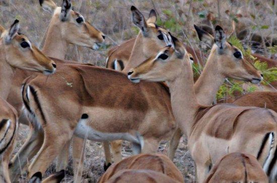 Nelspruit, Südafrika: Empalas - they are everywhere