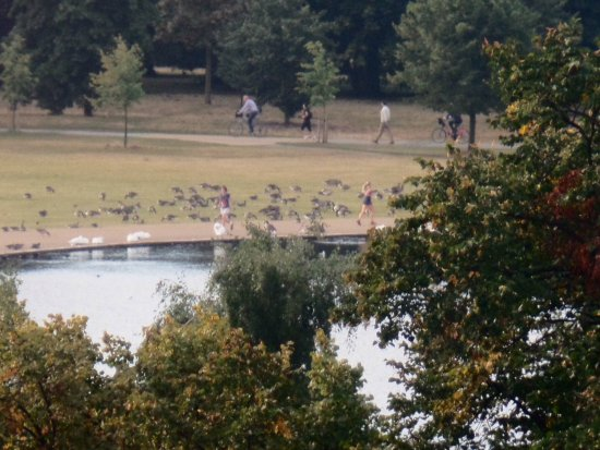 Thistle Kensington Gardens: The Serpentine. View from room 225. Camera on zoom.