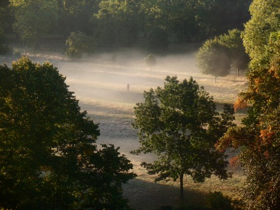 Thistle Kensington Gardens: View from room 225. Lone person in the mist, Hyde Park.